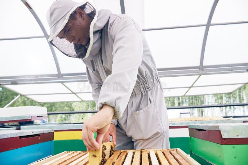 工作在蜂房的年轻蜂农 库存图片