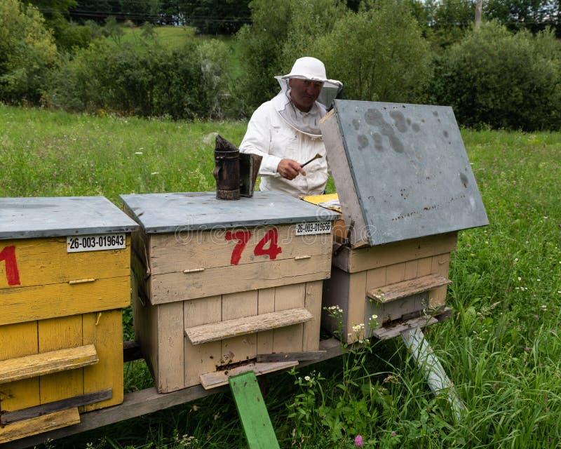 工作在蜂箱的蜂农 免版税库存照片