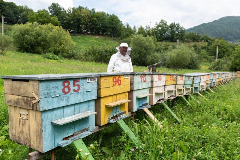 工作在蜂箱的蜂农 免版税库存图片