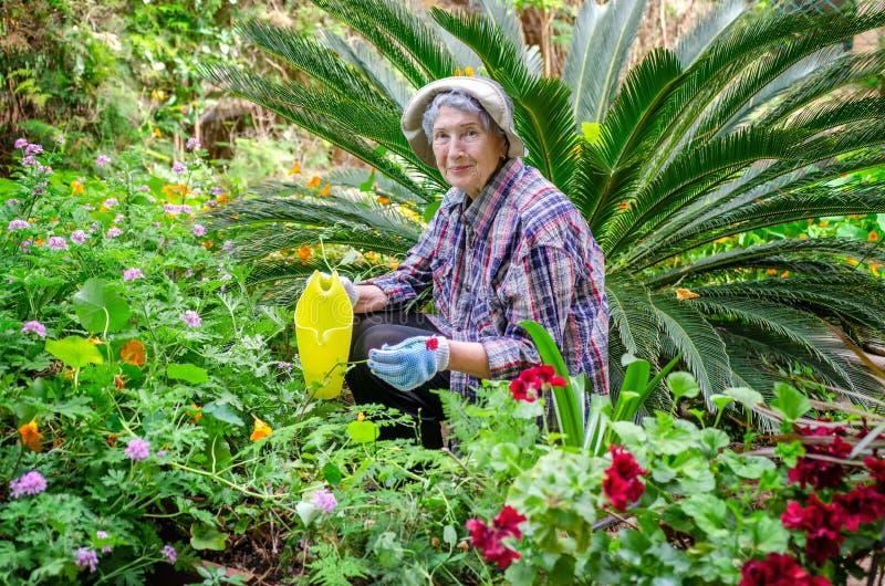 工作在装饰棕榈背景的庭院里的资深妇女 免版税库存照片