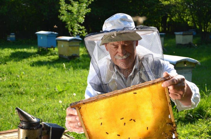 工作在他的蜂房的老练的资深蜂农 免版税图库摄影
