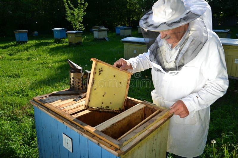工作在他的蜂房的老练的资深蜂农 免版税库存照片