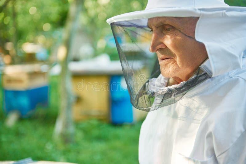 工作在他的蜂房的资深蜂农 库存照片