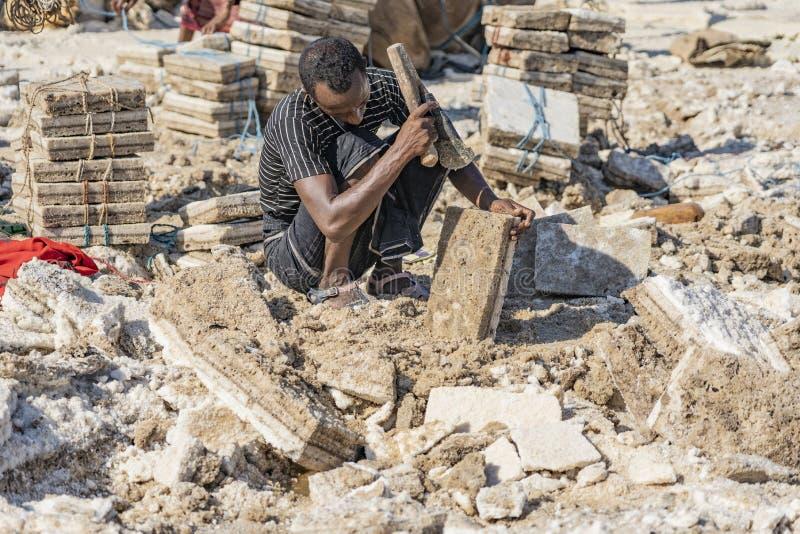 工作在Danakil消沉的盐平原的盐矿工在埃塞俄比亚在冬天季节期间 库存图片