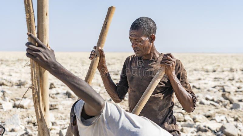 工作在Danakil消沉的盐平原的盐矿工在埃塞俄比亚在冬天季节期间 库存照片