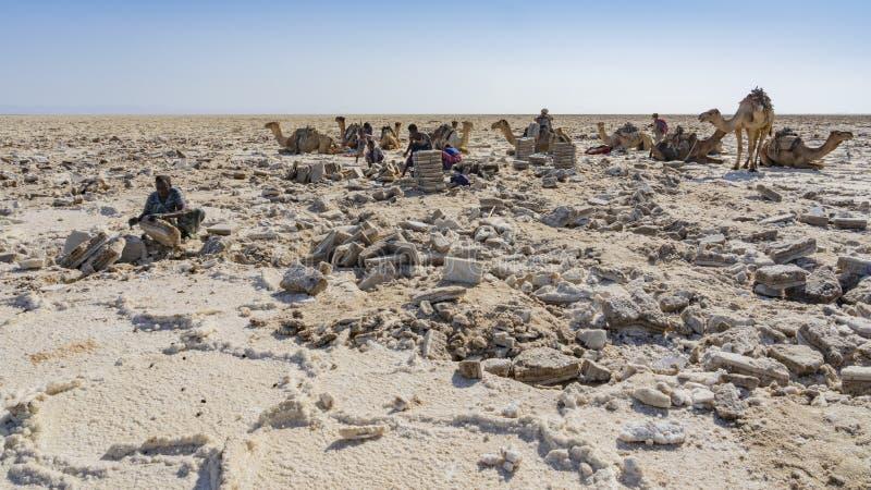 工作在Danakil消沉的盐平原的盐矿工在埃塞俄比亚 免版税库存照片