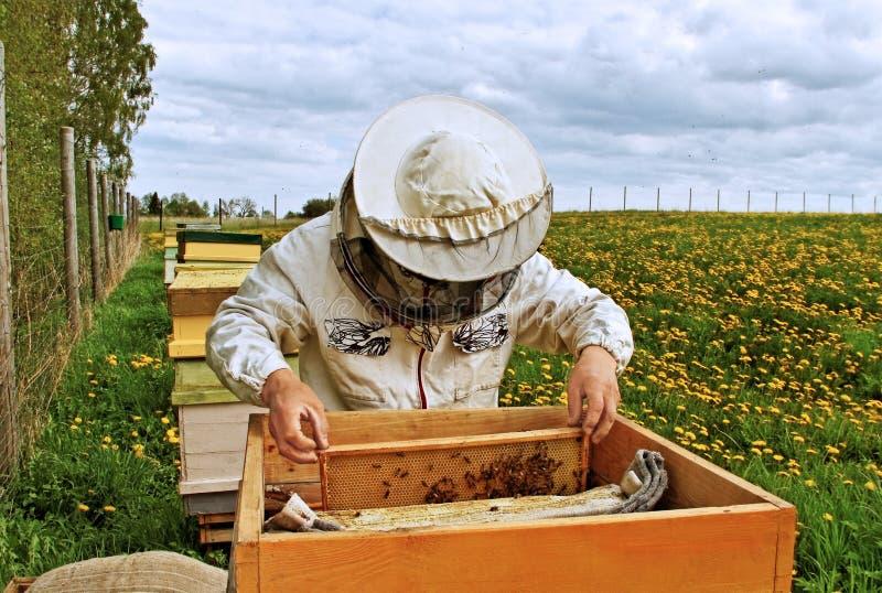 工作的养蜂家。 库存照片