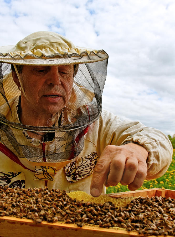 工作的养蜂家。 免版税库存图片
