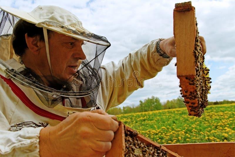 工作的养蜂家。 库存图片