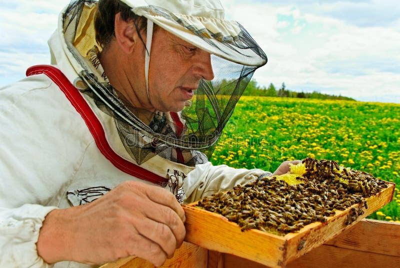 工作的养蜂家。 免版税库存照片