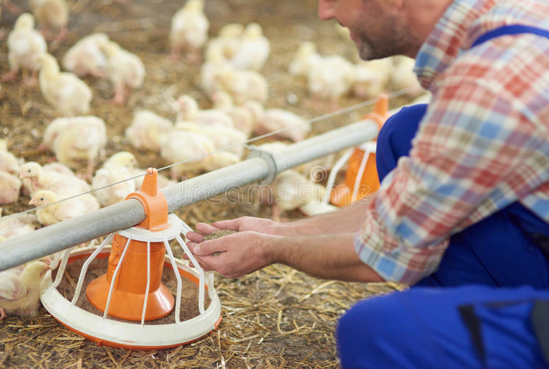 工作的农夫 免版税库存图片