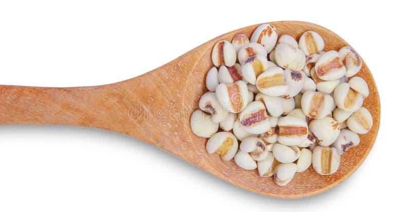 工作的泪花或Coix泪adlay在木匙子是非常滋补谷物 种子在矿物,维生素上是富有的,饮食 免版税库存照片