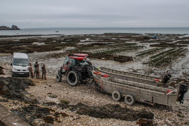 工作者和一台拖拉机在凯尔特海工作的海岸在牡蛎农场 海农场 免版税图库摄影