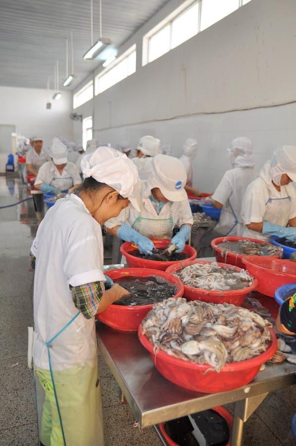 工作者在海鲜工厂分类未加工的新鲜的章鱼转移到下一个步骤生产流水线在越南 免版税库存图片