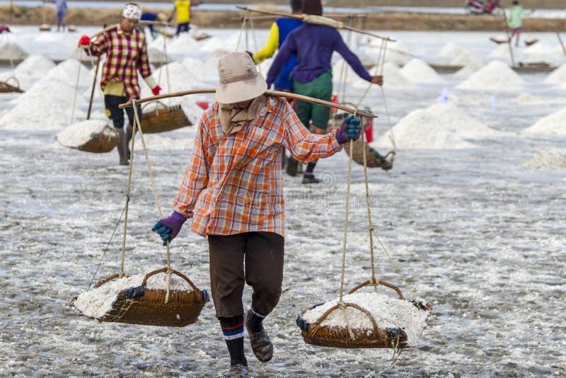 工作者在盐农场Petchaburi收集盐  免版税库存照片