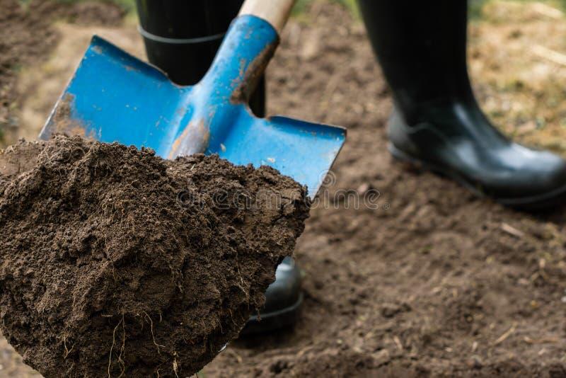 工作者在菜园里开掘与铁锹的黑土壤 库存照片