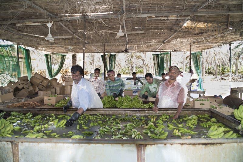 工作者在香蕉种植园 图库摄影