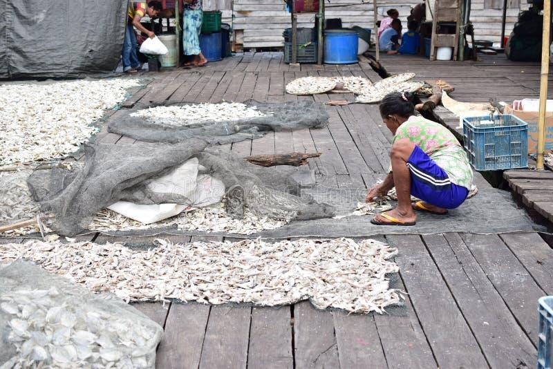 工作者烘干海鱼在阳光下 库存图片
