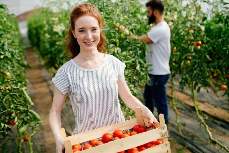 工作自温室的可爱的愉快的女性农夫 图库摄影