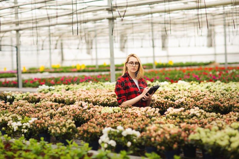 工作自温室的年轻女人 有吸引力的女孩检查和计数花,使用片剂计算机 免版税库存照片