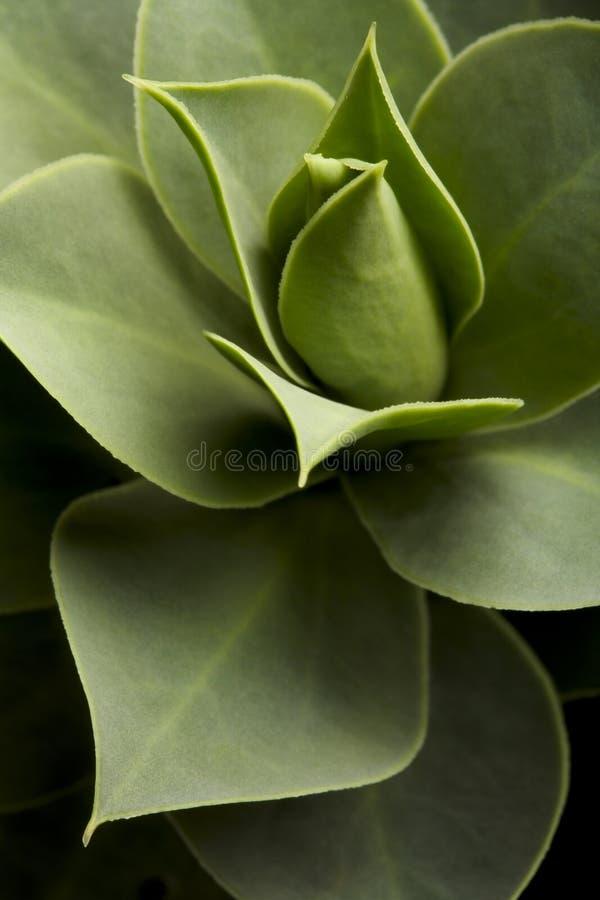 工厂多汁植物 免版税库存图片