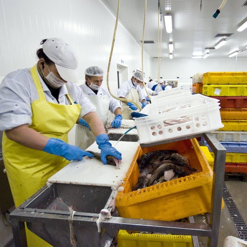 工厂鱼处理 免版税图库摄影