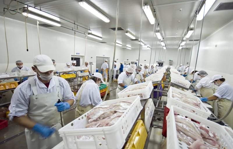 工厂鱼处理 图库摄影