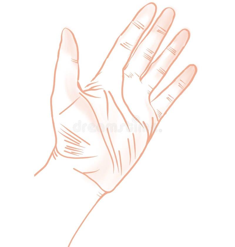 左手的例证,等高,被隔绝的,白色背景 皇族释放例证