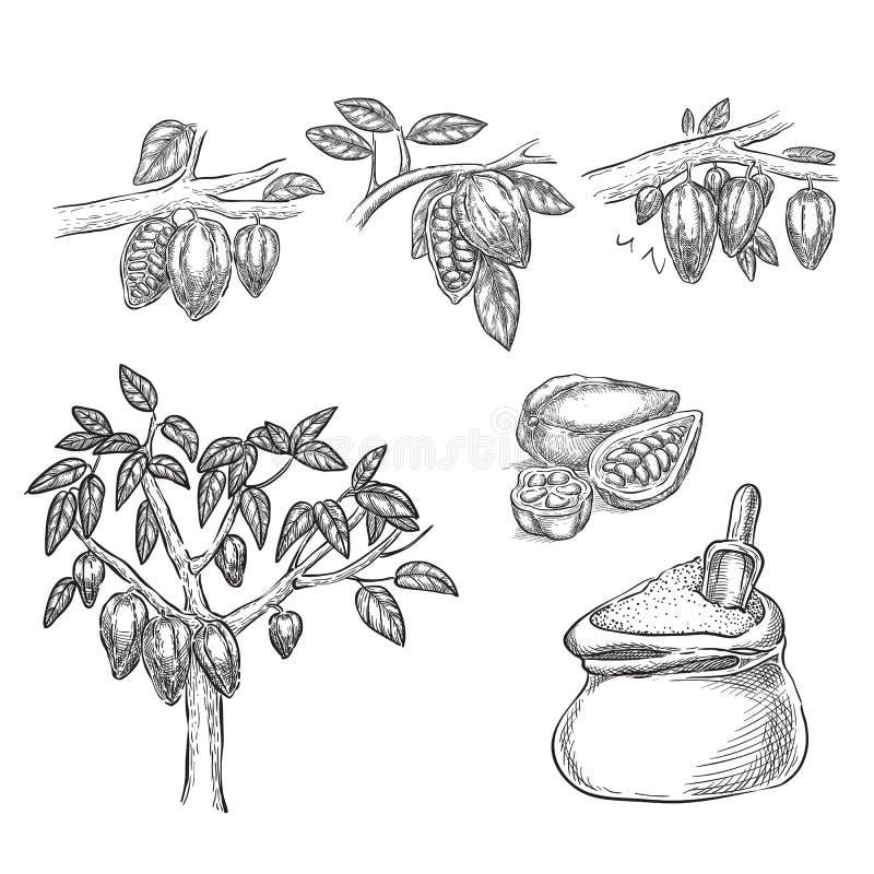 巧克力剪影传染媒介例证 在分支,豆,树,手拉的可可粉的可可粉荚隔绝了设计元素 向量例证