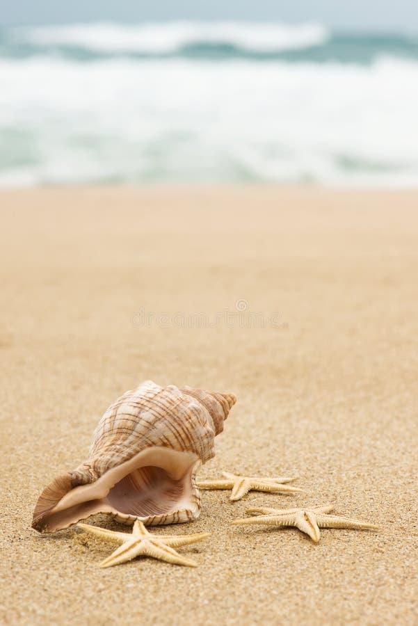 巧克力精炼机壳和海星在海滩 免版税图库摄影