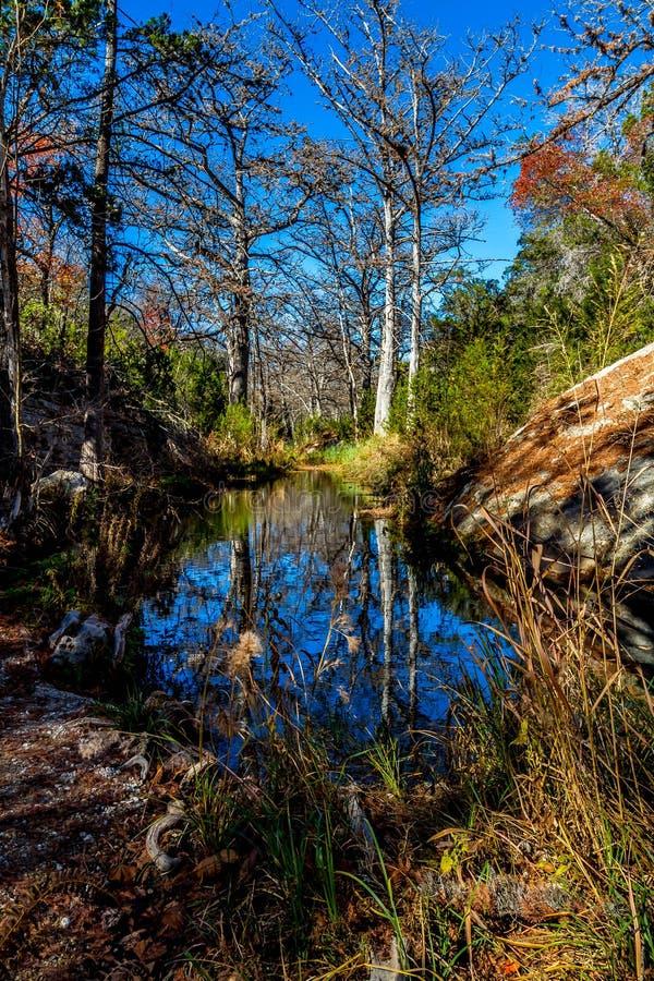 冬天在哈密尔顿小河的塞浦路斯树的美好的反射 免版税库存照片