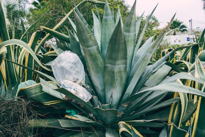 巨型多汁植物沾染与垃圾 免版税库存照片
