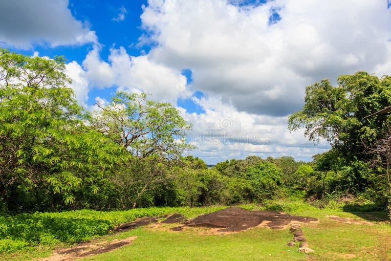 巨型树风景看法在斯里兰卡 库存照片