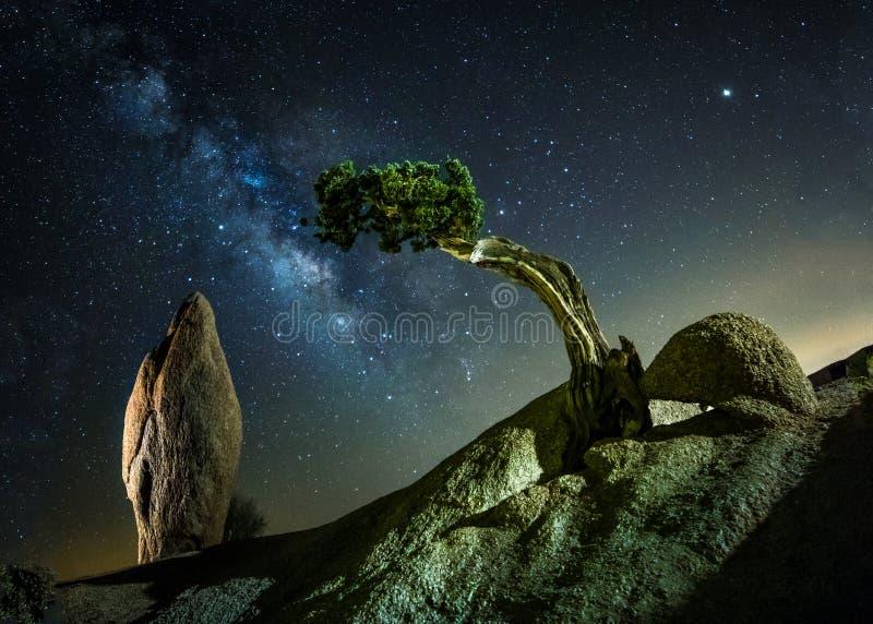 巨型独石岩石和Josha树国立公园 库存图片
