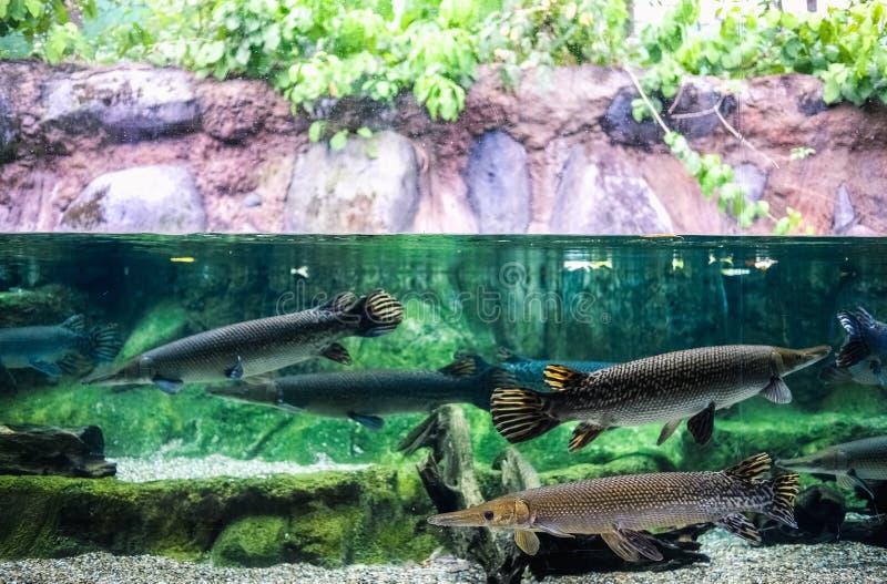 巨型的鱼水族馆 免版税图库摄影