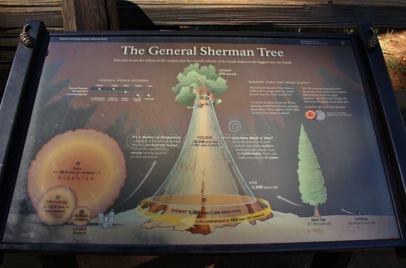 巨型美国加州红杉树在美洲杉国家公园,加利福尼亚 免版税图库摄影