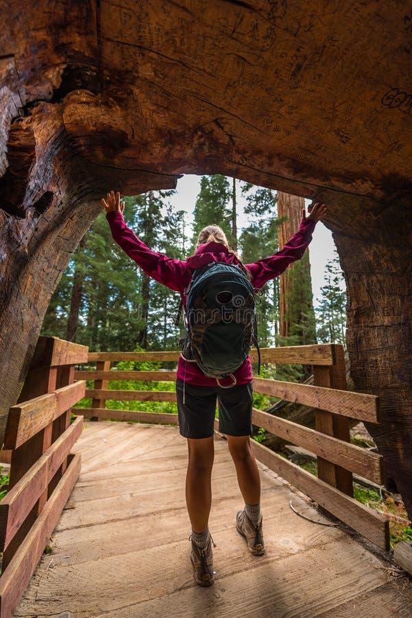 巨型美国加州红杉树隧道的远足者 免版税库存照片