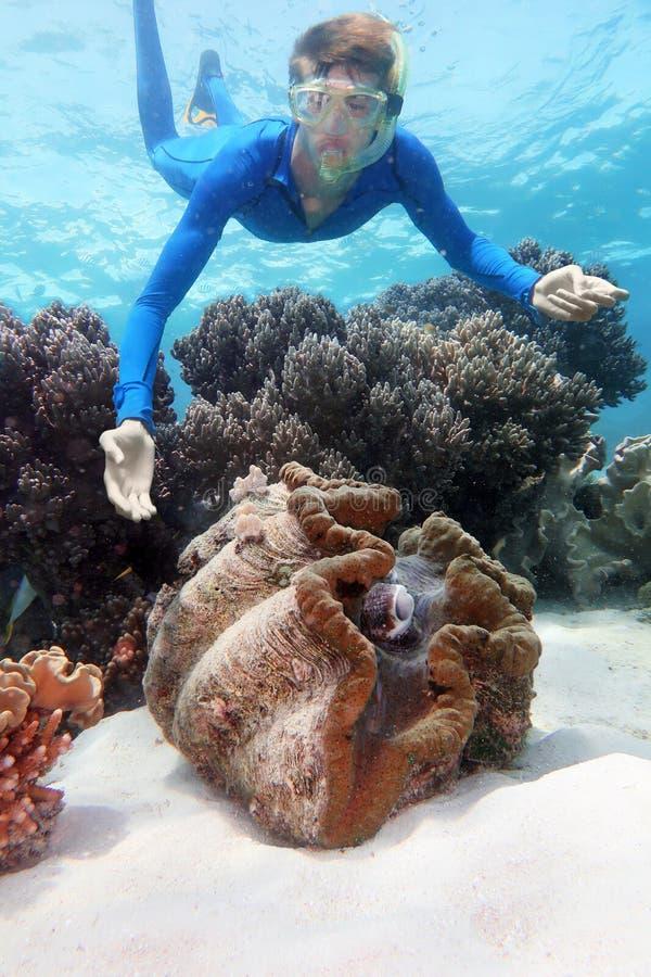 巨型蛤蜊潜水的大堡礁 库存图片