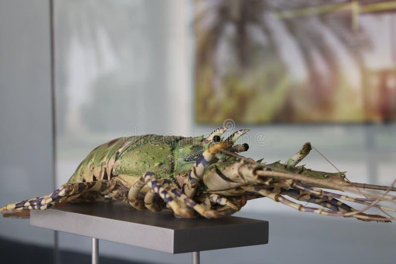 巨型龙虾 库存照片