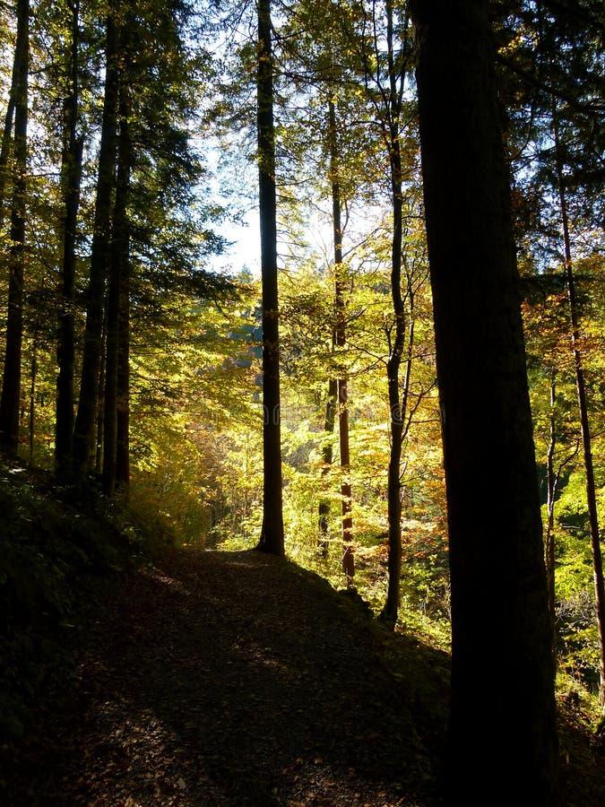 巨大不同的光在秋天森林里 库存照片