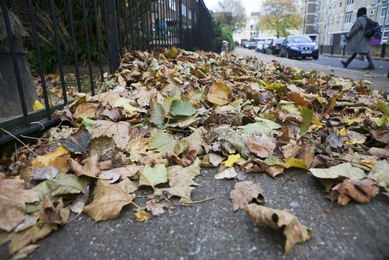巨大的堆干燥黄色在堆离开不生叶在砖车道 免版税图库摄影