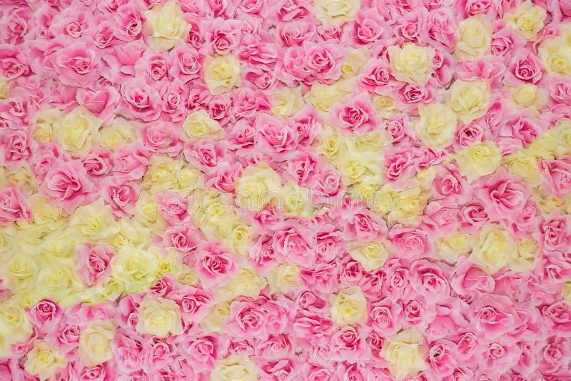 巨大的桃红色和黄色玫瑰背景 库存照片