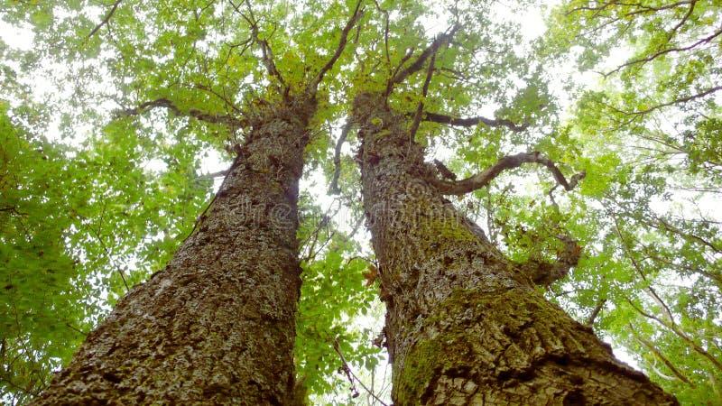 巨大的湿树 免版税库存照片