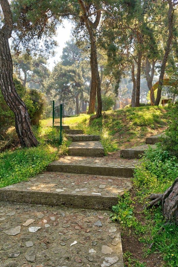 巨大的绿色树和草围拢的石台阶在春天的一个公园, Buyukada海岛王子海岛,伊斯坦布尔 免版税库存图片