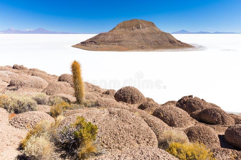 巨大的仙人掌撒拉族De Uyuni海岛火山山风景风景 免版税库存图片