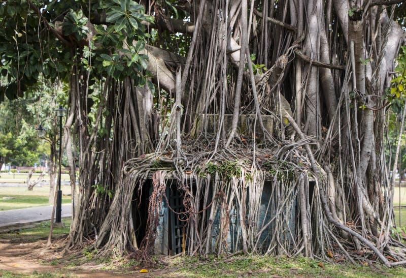 巨大的结构树 图库摄影