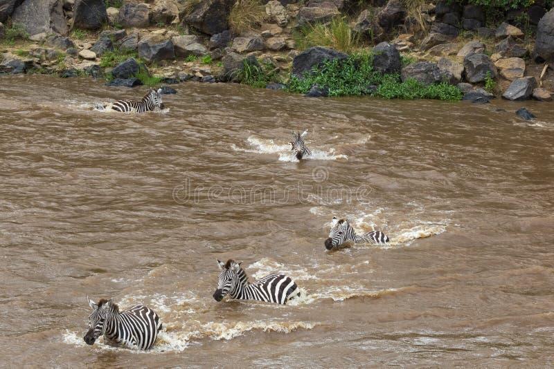 巨大迁移在肯尼亚 马塞语玛拉,塞伦盖蒂,非洲 图库摄影