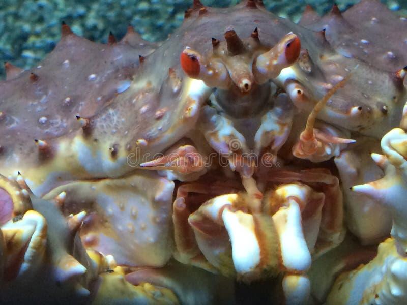 巨蟹 库存图片
