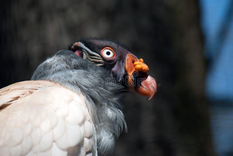 巨雕鸟的画象 库存照片