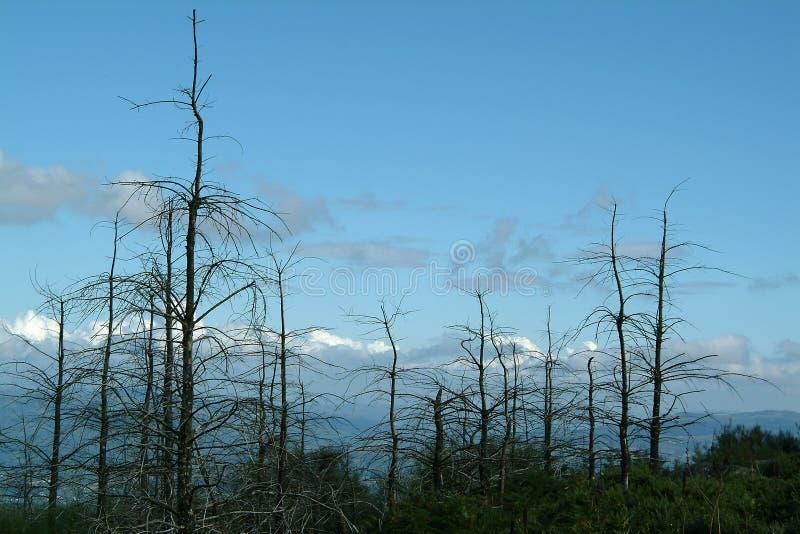 已故的森林 免版税库存照片
